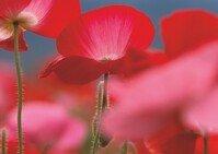 Farbwirkung rot